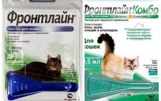 Fasādes blusu pilieni kaķiem