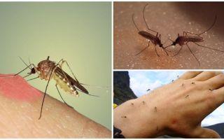 Kāpēc dabā ir odi