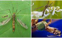Lieli odi ar garām kājām (kārbas)