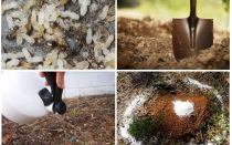Kā iegūt skudras no dārza tautas līdzekļiem