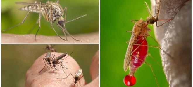 Cilvēki, ar kuriem asinsgrupa visbiežāk tiek sakapuši ar odiem