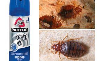 Nozīmē Raptor no bedbugs