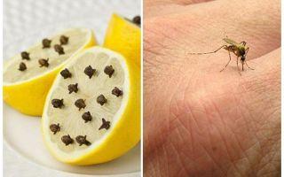 Citronu ar moskītu krustnagliņām bērniem un pieaugušajiem