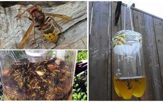 Mājas slazdi hornetiem un lapsenēm