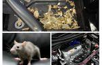 Kā iegūt peles no automašīnas