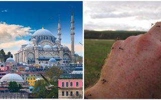 Vai Turcijā ir odi